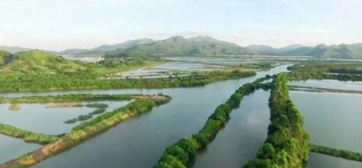 """海丰有个""""中国水鸟之乡"""" """"最美水鸟""""紫水鸡定居在此"""