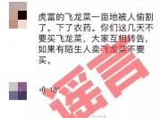 """陆丰""""碣石下农药飞龙菜被偷割""""是谣言 造谣嫌疑人被抓"""