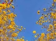 海丰台农庄园春色满园 吸引大批游客