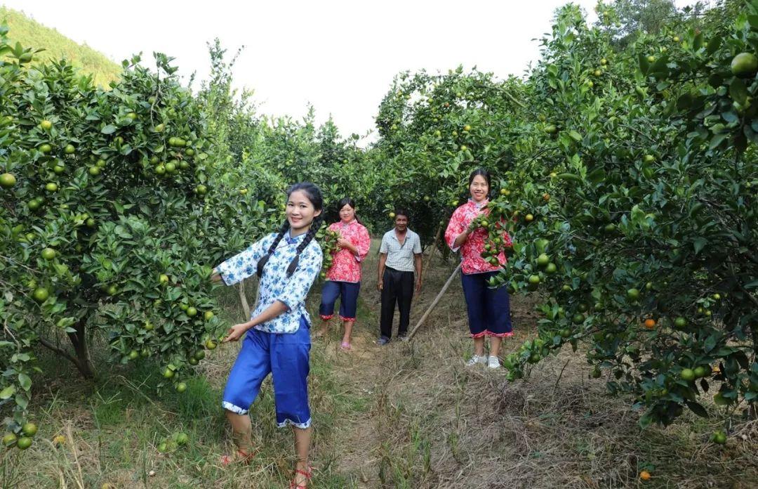 陆河上护镇护径村农业产业园皇帝柑种植基地 陆河新闻 第1张