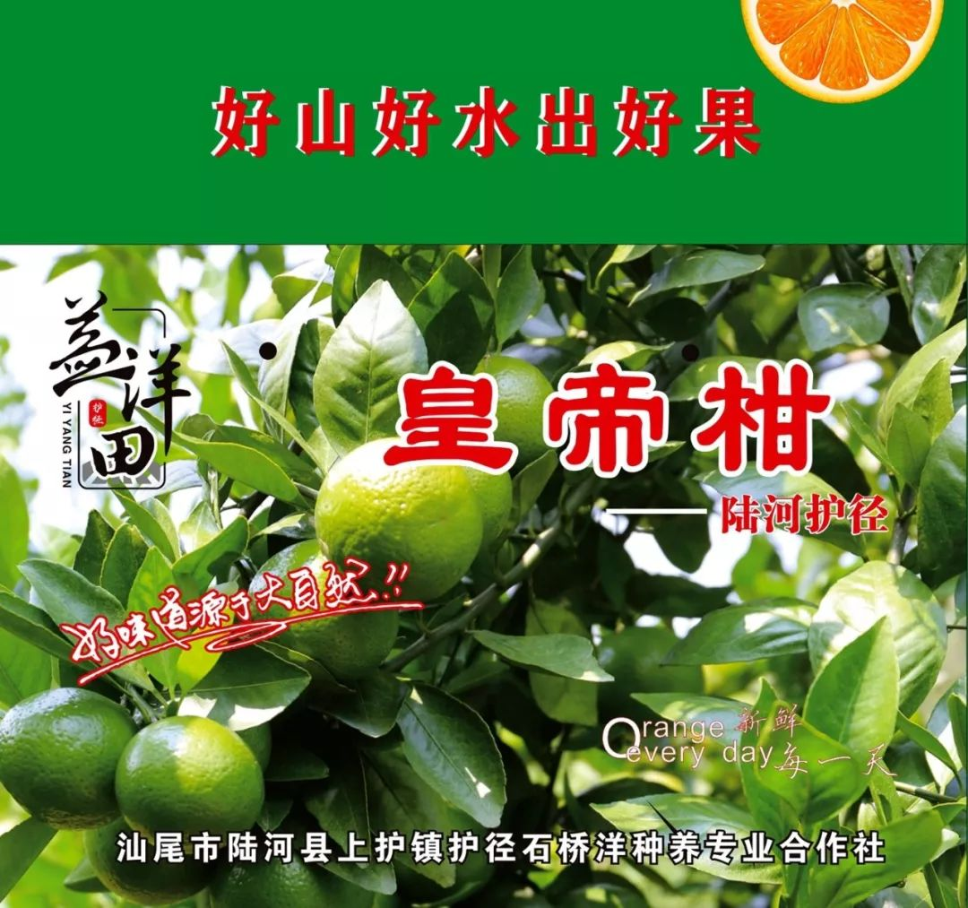陆河上护镇护径村农业产业园皇帝柑种植基地 陆河新闻 第5张