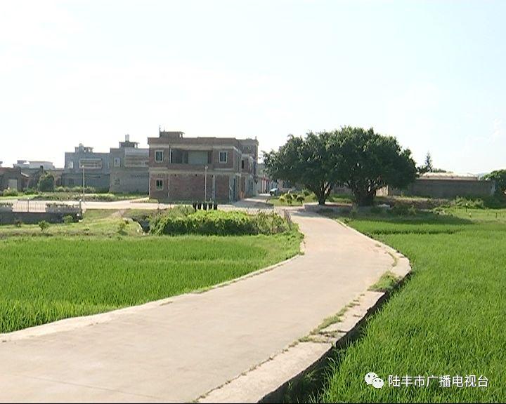 陆丰碣石镇的8个省定贫困村已实现100%脱贫 陆丰新闻 第4张