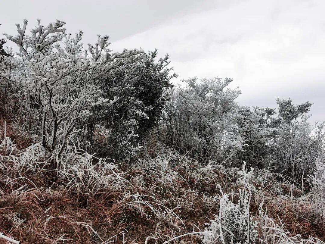 """汕尾也""""下雪""""了 海丰莲花山出现绝美雾凇 海丰新闻 第7张"""