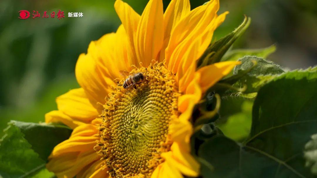 海丰台农庄园春色满园 吸引大批游客 海丰新闻 第4张