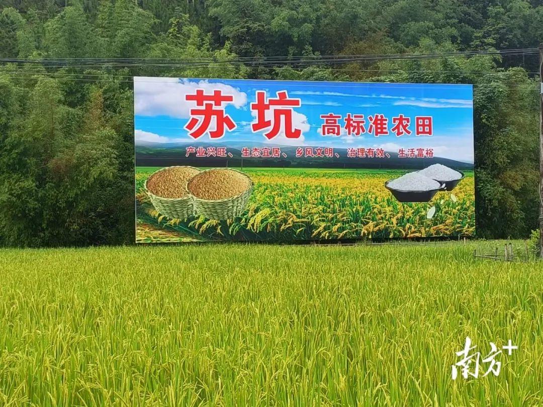 红色文化村:陆河县苏坑村 陆河新闻 第4张